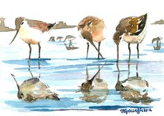 ACEO Limited Edition 3/25 Pipers Shore bird art by annalee377