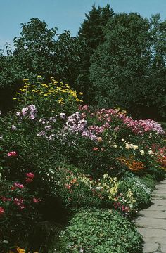 Article for Perennials that bloom from seed the first year--hgtv.com