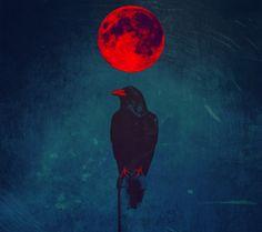 Crow and red moon art Crow Art, Raven Art, Bird Art, Red Raven, The Crow, Fantasy Kunst, Fantasy Art, Corvo Tattoo, Rabe Tattoo