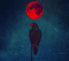 crow - love this, can not find the source, wish I could credit it