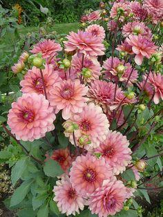 How to Plant Potted Flowers Outdoors in the Soil : Garden Space – Top Soop Cut Flower Garden, Flower Farm, Flower Pots, Big Garden, Fresh Flowers, Beautiful Flowers, Dalia Flower, Growing Dahlias, Flower Names