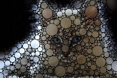 Bubble Kitten Art by FiddleFlix, via Flickr