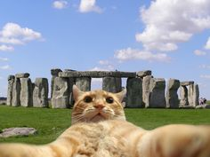 Cuz cats like to travel too...12 Pictures Of Some Well-Traveled Cats