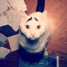【超絶癒し】いつも心配そうな眉毛を持つ猫「サムさん」がネットで話題に - NAVER まとめ
