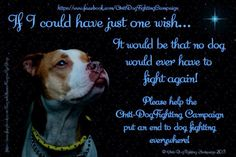Let us all help and fight to stop dog fighting and abuse!