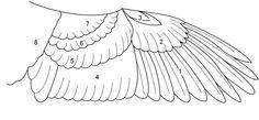 Bird's wing nz - Google Search