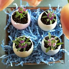 Egg Planter: super cute for easter decoration and then plant them in the garden!