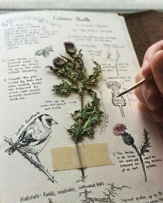 – DIY How do I make a herbarium? – DIY – – Comment faire un herbier? – DIY side herbarium with plant Kunstjournal Inspiration, Art Journal Inspiration, Journal Ideas, Journal Art, Sketch Journal, Journal Design, Art Journal Challenge, Memory Journal, Drawing Journal