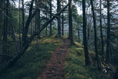 Hiking Trail Photo By Ales Krivec Stress, Motivational Images, Inspirational Quotes, Forest Path, Forest Hill, Dark Forest, Law Of Attraction Money, Attraction Quotes, Running Inspiration