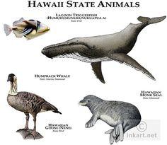Fine art illustration of the official animals of the state of Hawaii Rare Animals, Animals And Pets, Hawaiian Monk Seal, Animal Plates, Animal Tracks, Mundo Animal, Animal Species, Animals Of The World, Animal Drawings