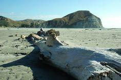 Mahia Beach Good Old, Homeland, New Zealand, Competition, Kiwi, Spy, Beach, Places, Water