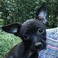 Leesburg Virginia Terrier Unbekannter Typ Klein Treffen Sie