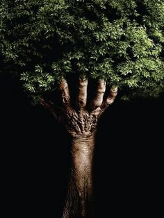 This image was taken by an unknown photographer. I really the texture of the skin on the hand because it reminds me of tree bark. I think the way human and natural structures work together in this image are interesting because it shows an idea of what happens to our bodies after we pass away.