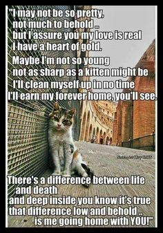 Adopt feral cats, nothing is more rewarding.