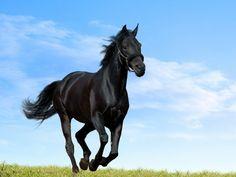 horse wallpaper hd | Horses HD Wallpapers – Horse Desktop Wallpapers | HD Wallpapers ...