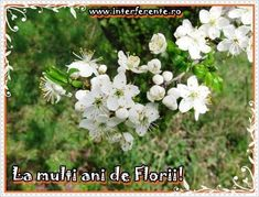 Avatare de Florii si mesaje de la multi ani
