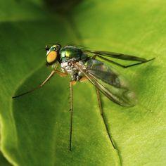 The Green Manalishi... Photo by Chris Crowder.