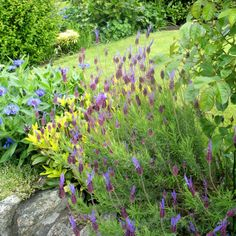 Learn the basics of Organic Landscaping!