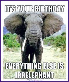 Funny Animal Birthday Meme: Everything else is irrelephant!