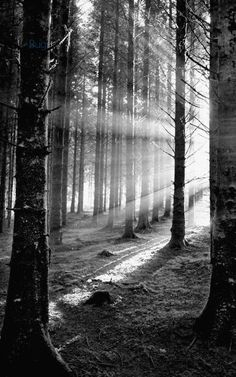 21 trendy Ideas for nature paysage noir et blanc Dark Photography, Black And White Photography, Street Photography, Landscape Photography, Photography Lighting, Canon Photography, Photography Women, Photography Business, Beauty Photography