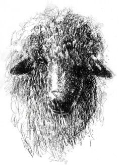 Wooly face, Artist Sean Briggs producing a sketch a day, prints available at https://www.etsy.com/uk/shop/SketchyLife ##sketchaday #sketchmarchPrintson#Etsyhttp://etsy.me/1rARc0J ##wool #art #drawing #ram #sheep