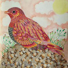 """My Tropical Birds from #WildSavannah #MillieMarotta #milliemarottabooks…"""