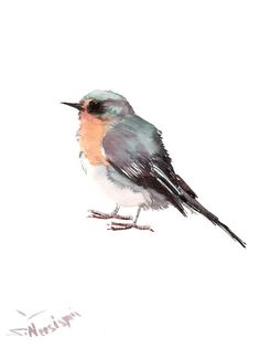 Pink Robin Original watercolor painting 12 X 9 in by ORIGINALONLY