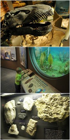Explore millions of years of the history of the natural world in Norman at the Sam Noble Museum on the University of Oklahoma campus. Thousands of square feet of exhibition space contain dinosaur skeletons, rotating displays and much more.