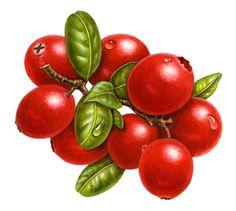 foodartist.files.wordpress.com 2010 09 cranberries1.jpg
