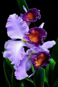 Красивая орхидея…
