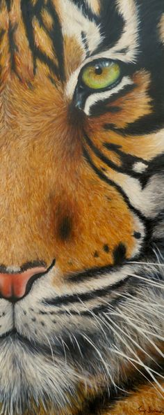 """I see you'  Close up tiger portrait Oil on canvas 30""x12"""
