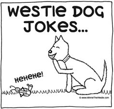 "Westie dog jokes... some real ""howlers"" here!"