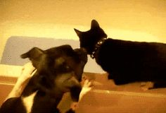 15 GIFs mostram os animais mais sacanas que existem - Mega Curioso