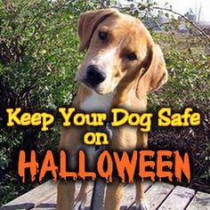 Keep Your Dog Safe on Halloween - Homemade by Jade