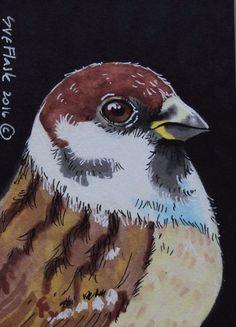 ACEO Original Pen Promarker Drawing Bird Wild Brown Portrait Sparrow Sue Flask  #Realism
