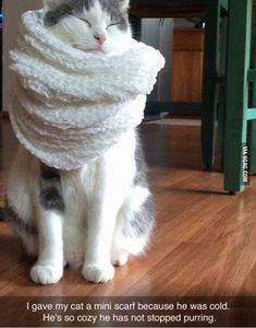 Funny pictures about Cozy Cat Scarf. Oh, and cool pics about Cozy Cat Scarf. Also, Cozy Cat Scarf photos. Cute Funny Animals, Funny Animal Pictures, Cute Cats, Cute Pictures, Funniest Animals, Happy Pictures, Random Pictures, Animal Pics, Funny Cat Memes