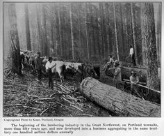 A logging crew in the early 1870s cuts and hauls logs from a patch of timber on what today is part of downtown Portland. (Image: Joseph Gaston)