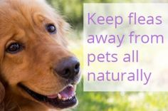 Keep Fleas Off Pets the Safe, All-Natural and Cost Effective Way