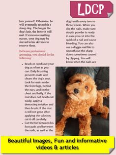Labradoodle-Cockapoo iPad magazine. From the app store. Only $2.99 per month and your first month free! Don't miss out on your monthly dose of cute Labradoodles & Cockapoos