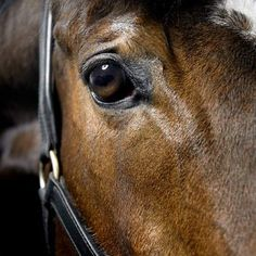 50 Adorable Horse Pictures by Matthew Seed