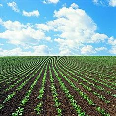 Crop Services Suffolk by Willington Crop Services. Precision in Farming: Soil Sampling, GPS Soil Sampling & Mapping, Data Management & Agronomy. African Union, Case Study, Watercolors, Nature, Outdoor, Art, Outdoors, Art Background, Water Colors