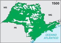 São Paulo - Conheça seu Estado (História e Geografia): 45 - Vegetação nativa do estado de São Paulo entre...