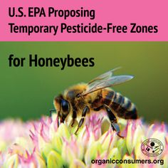 The Environmental Protection Agency is finally making moves to #SaveTheBees! Learn more about this important proposal to protect our precious pollinators!