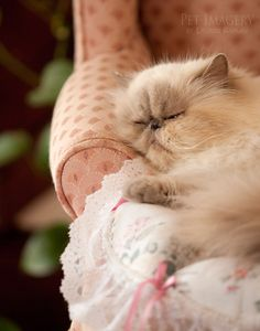 Beauty sleep♥