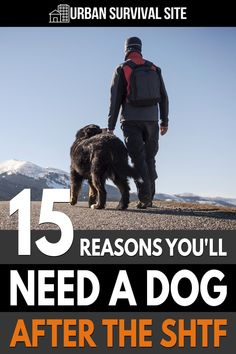Consider what kind of dog would be best during a crisis and what you might want to train him or her to do to help your family after the SHTF.