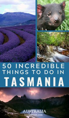50 things to do in Tasmania, Australia you will love. Tasmania is an amazing island of Australia with plenty of attractions for all seasons.