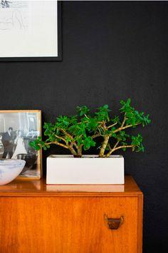 Via Desire to Inspire | Mid Century Modern | Plant | Black Wall