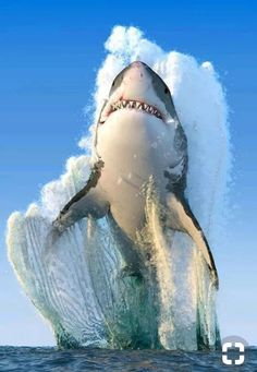 Over 100 shark species: a mammal or a fish? About facts and other interesting questions - Mammals Biggest White Shark, Great White Shark, Nature Animals, Animals And Pets, Cute Animals, Animals Sea, Beautiful Creatures, Animals Beautiful, Beautiful Ocean