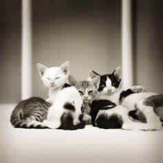 a family by *mohdfikree on deviantART
