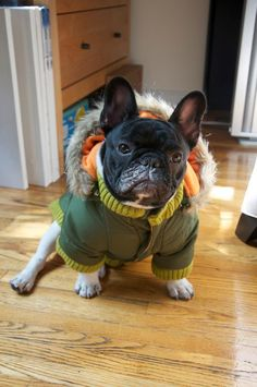 last chance french bulldog rescue French Bulldog Rescue, Baby French Bulldog, French Bulldogs, Cute Dogs And Puppies, I Love Dogs, Doggies, Cutest Puppy Ever, Bulldog Pics, Little Dogs